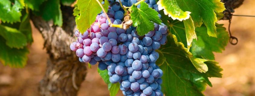 La Française lance la 1ère SCPI viticole, LF Les Grands Palais