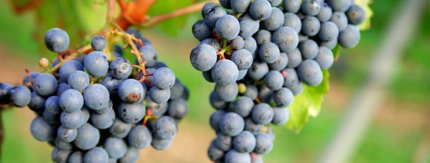 LF Les Grand Palais boucle son premier investissement viticole