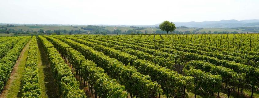 Deuxième vignoble pour la SCPI LF Les Grand Palais